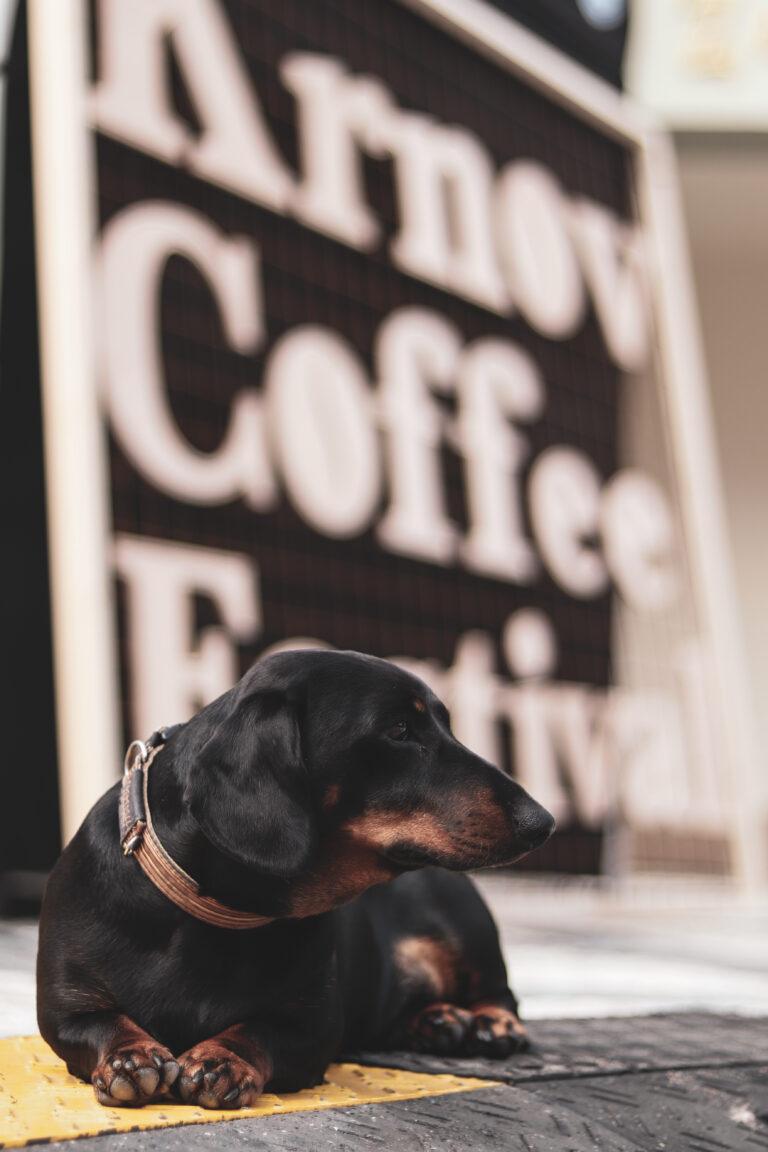 krnov coffee festival 2020 - 001